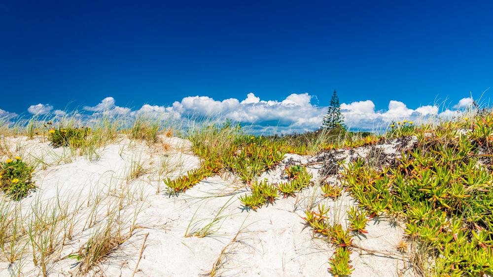 nowa-zelandia-bay-of-island-9