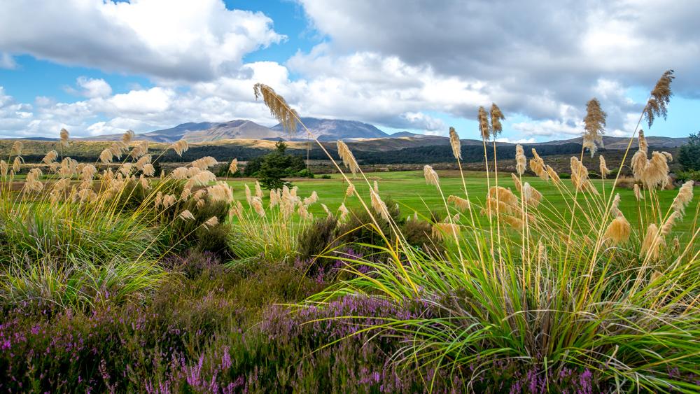 whakapapa-Nowa-Zelandia-5