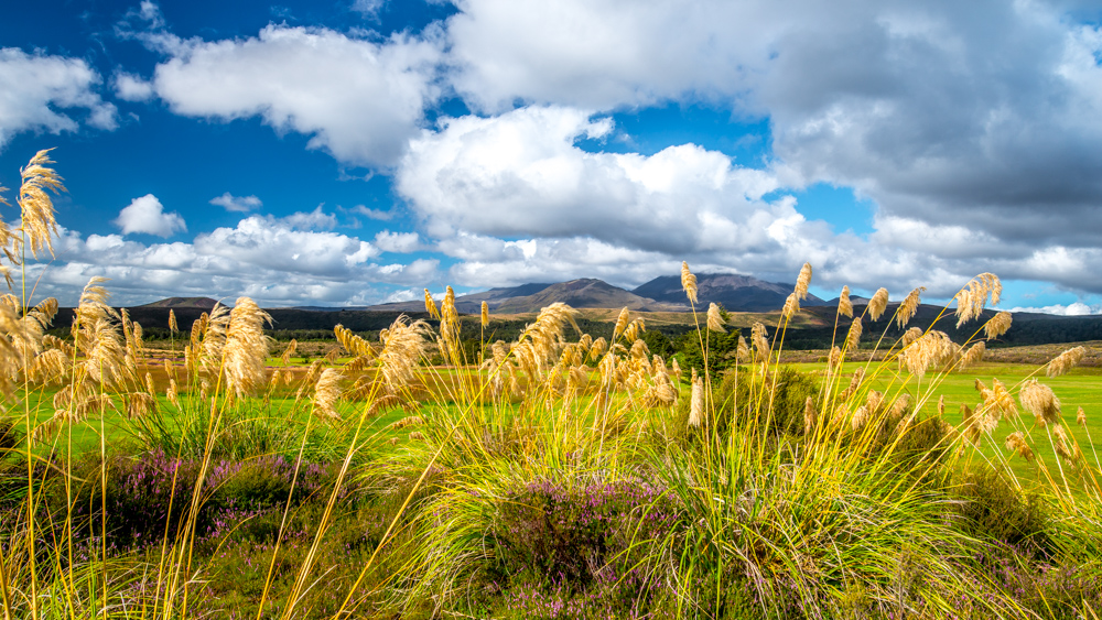 whakapapa-Nowa-Zelandia-7