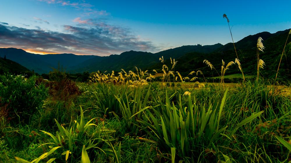nowa-zelandia-abel-tasman-park-22