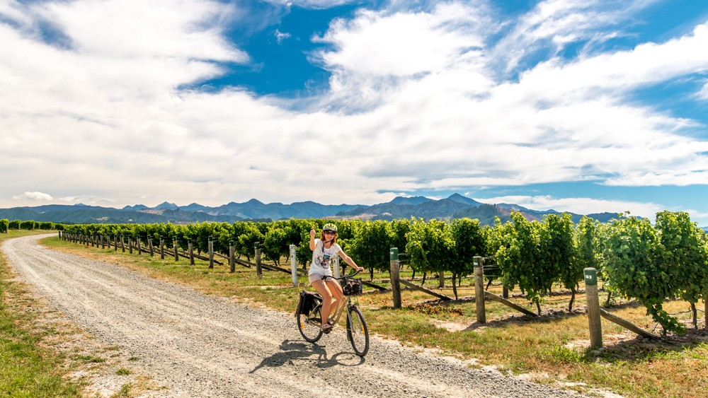 renwick-wine-by-bike-16
