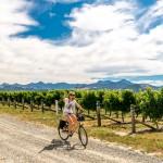renwick-wine-by-bike-16