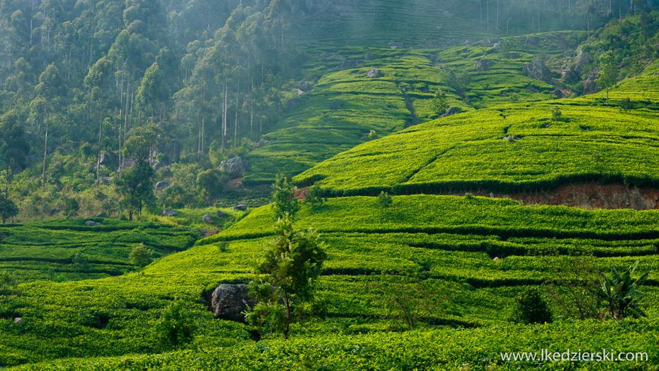 kędzierski sri-lanka-plantacje-herbaty-liptons-seat-16