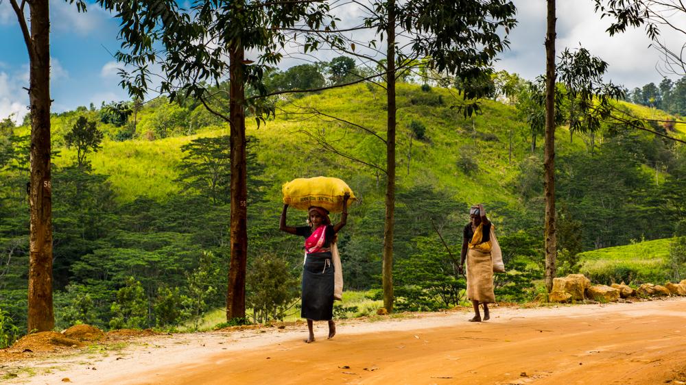 Sri lanka Plan podrozy-28