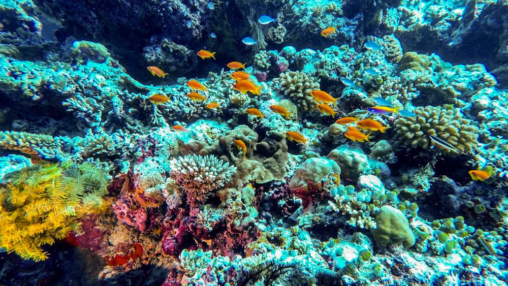 Malediwy Nilandhoo-73