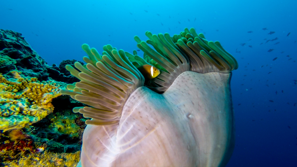 Malediwy Nilandhoo-77