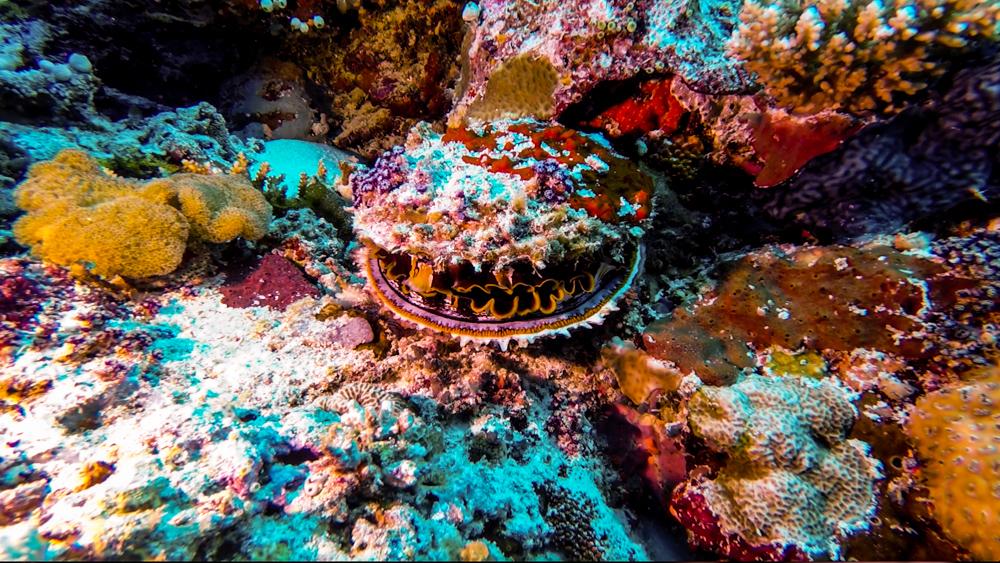 Malediwy Nilandhoo-78