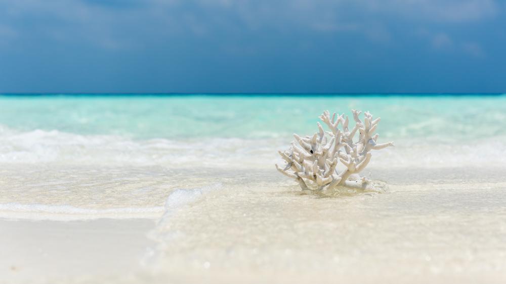 Malediwy Nilandhoo-8