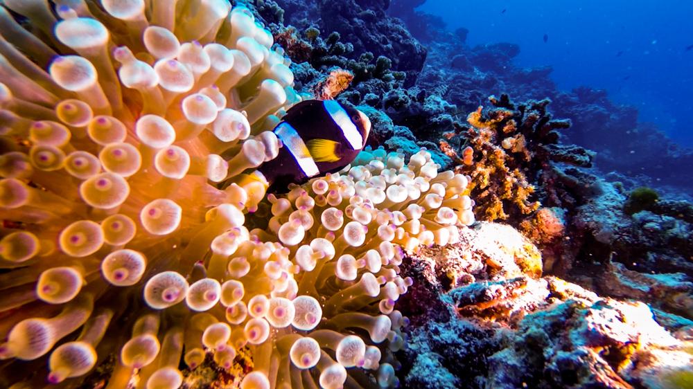 Malediwy Nilandhoo-81