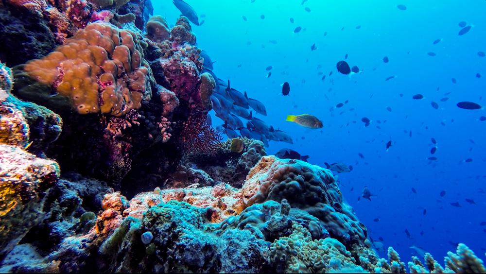 Malediwy Nilandhoo-83
