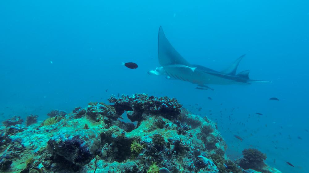 Malediwy Nilandhoo-85