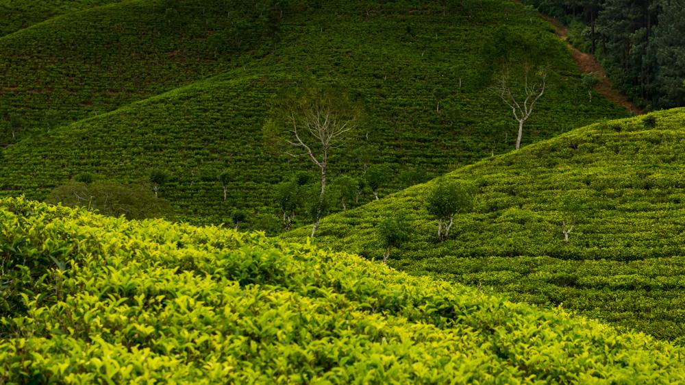 Sri Lanka najpiekniejsze miejsca-4