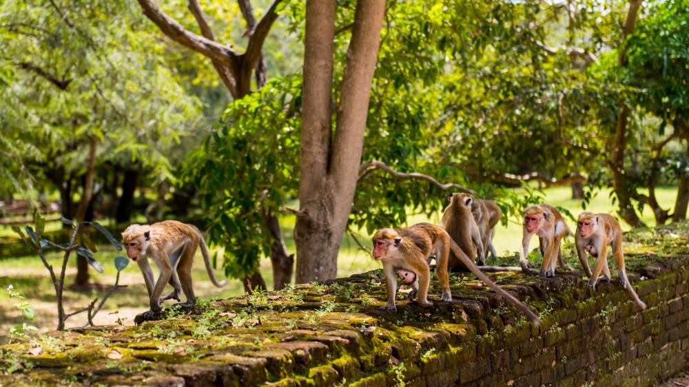 Sri lanka Polonnaruwa-17