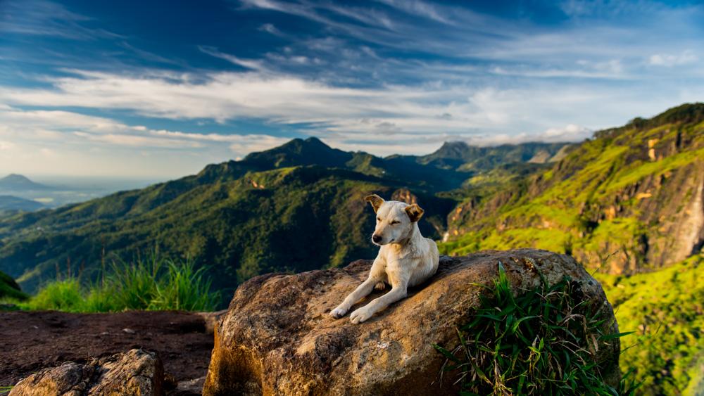 Adams Peak Ella - Sri Lanka-12