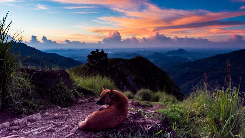 Co zobaczyc w Ella - Sri Lanka-3