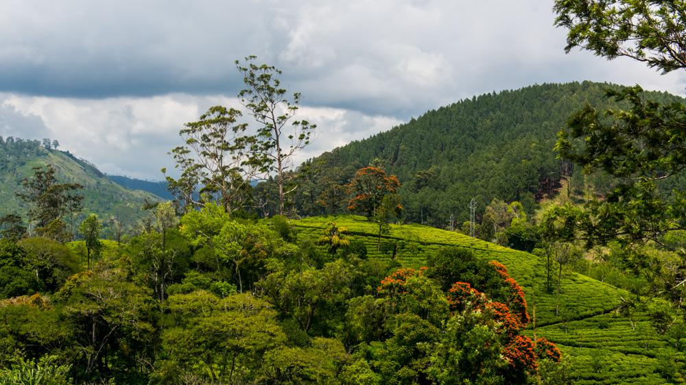 Co zobaczyc w Ella - Sri Lanka-4