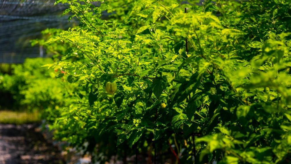 Sun Aqua Vilu Reef-65