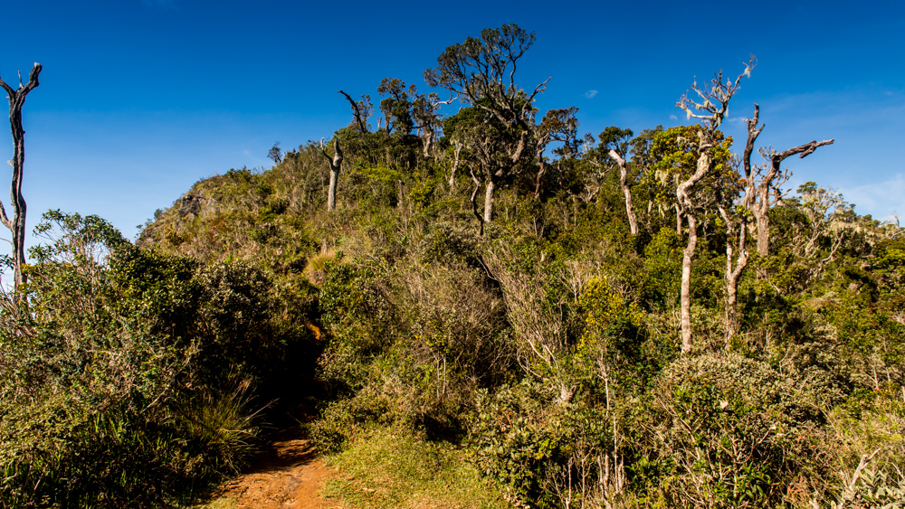 Horton Plains-14