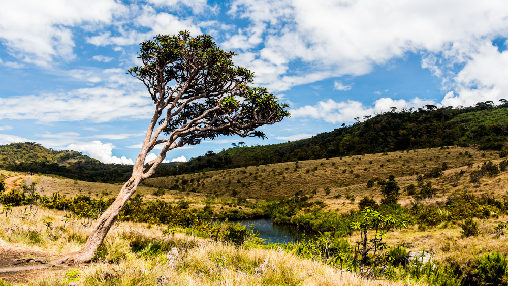 Horton Plains-36