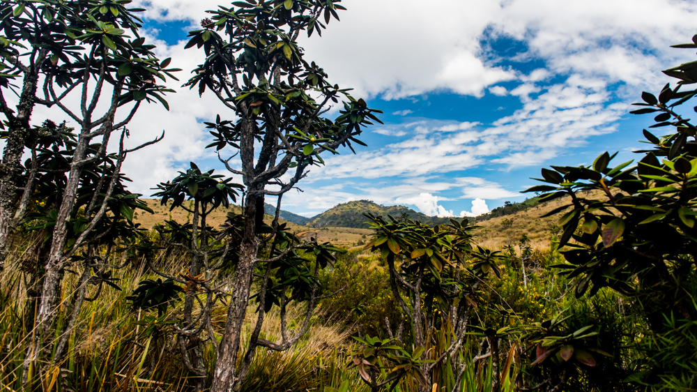 Horton Plains-38