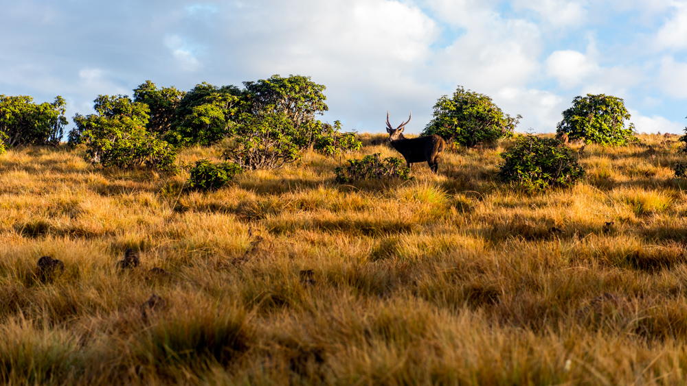 Horton Plains-8