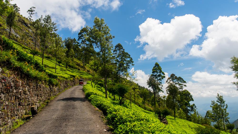 Plantacje herbaty Sri lanka-22
