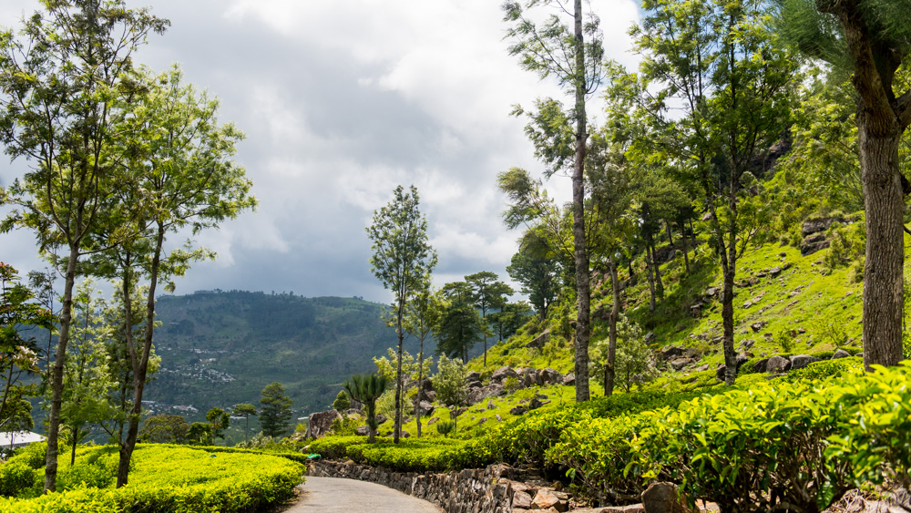 Plantacje herbaty Sri lanka-26