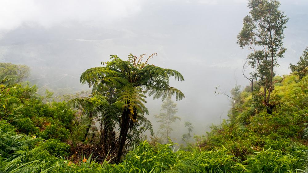 Plantacje herbaty Sri lanka-6