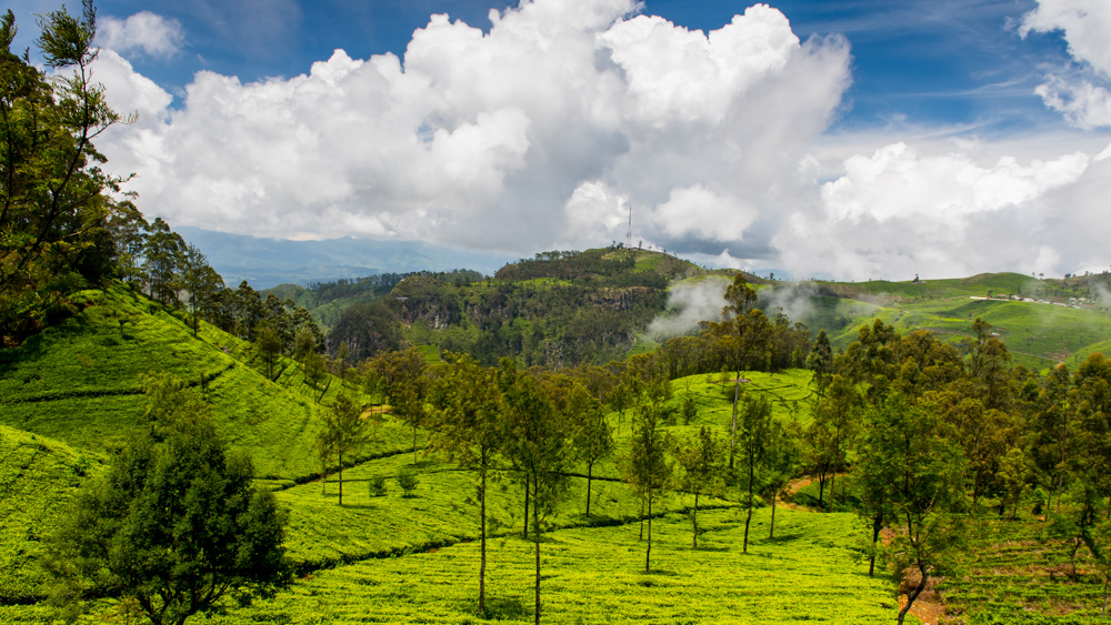 Plantacje herbaty Sri lanka-9