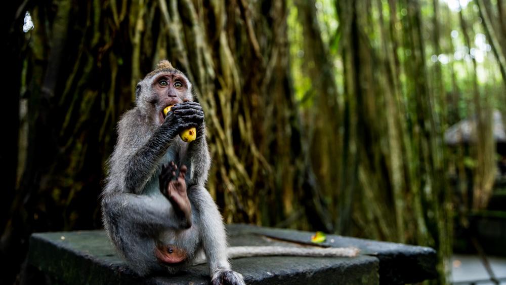 Najpiekniejsze miejsca na Bali-96