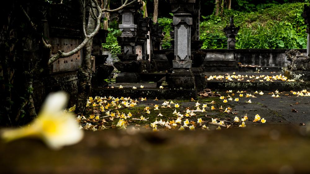 Huśtawka Ubud Bali-1-4