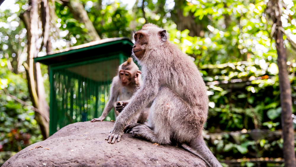 Ubud Moneky Forest-2