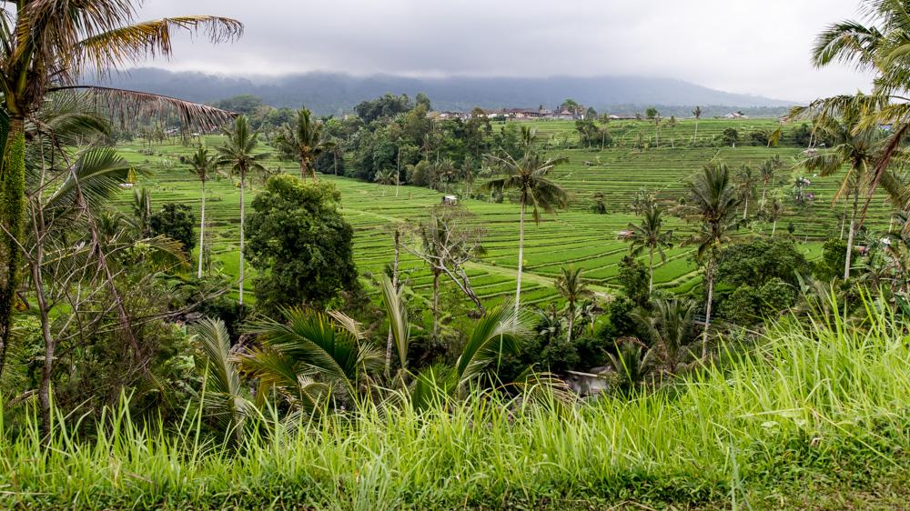 Najpiekniejsze Tarasy Ryżowe Bali-2