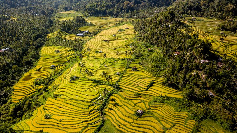 Tarasy ryzowe Sambangan-2-2
