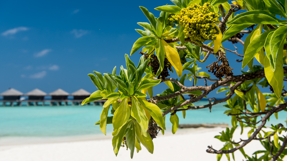 Malediwy-51
