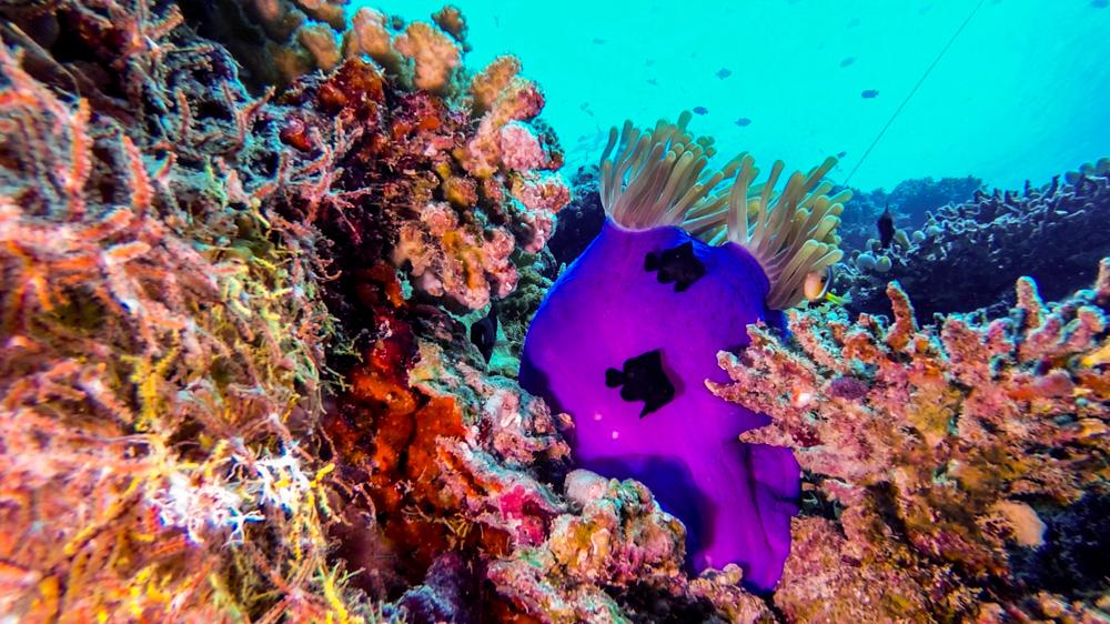 Malediwy Nilandhoo-72
