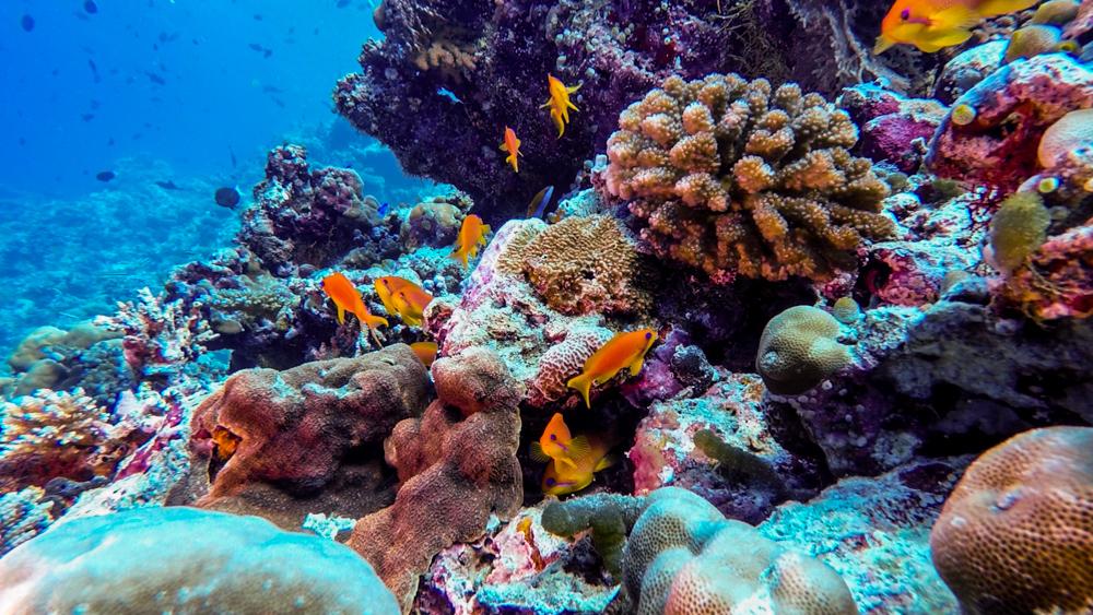 Malediwy Nilandhoo-75