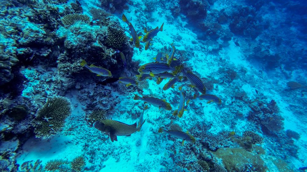 Malediwy Nilandhoo-82