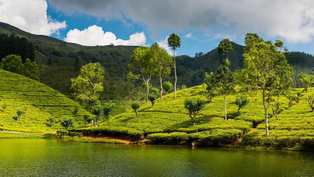 Sri Lanka Sembuwatte Lake-18