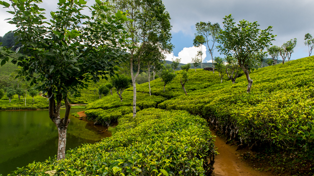 Sri Lanka Sembuwatte Lake-26