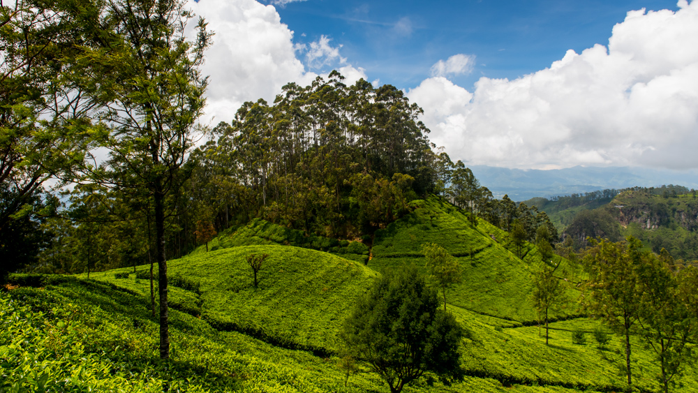 Sri Lanka najpiekniejsze miejsca-27
