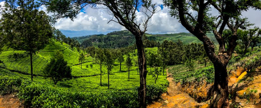 Sri lanka Kandy-22