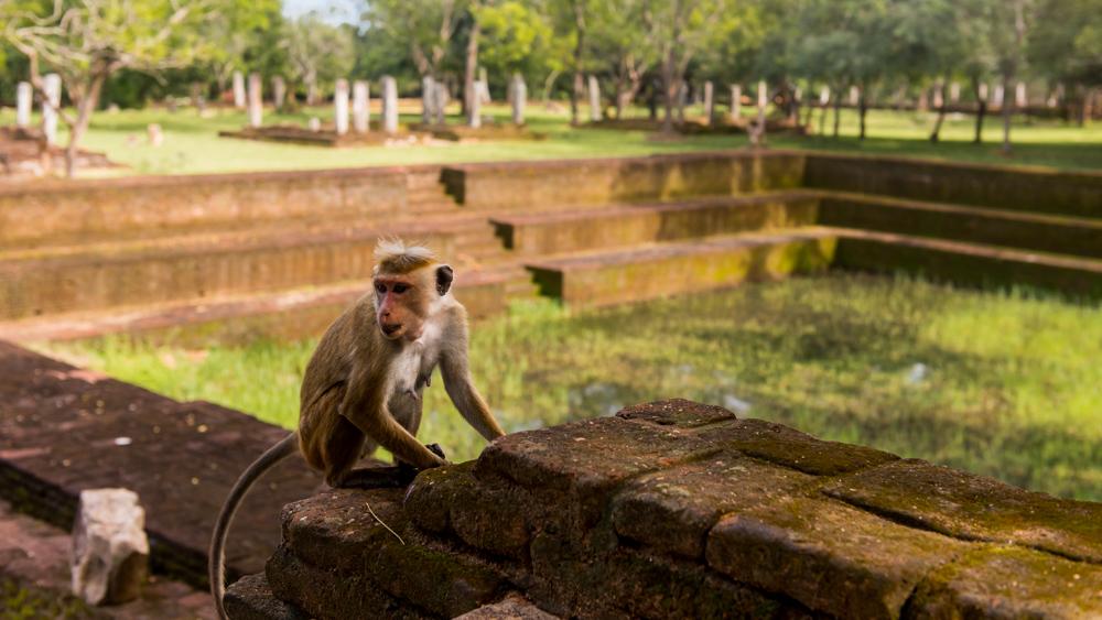 Sri lanka Polonnaruwa-29