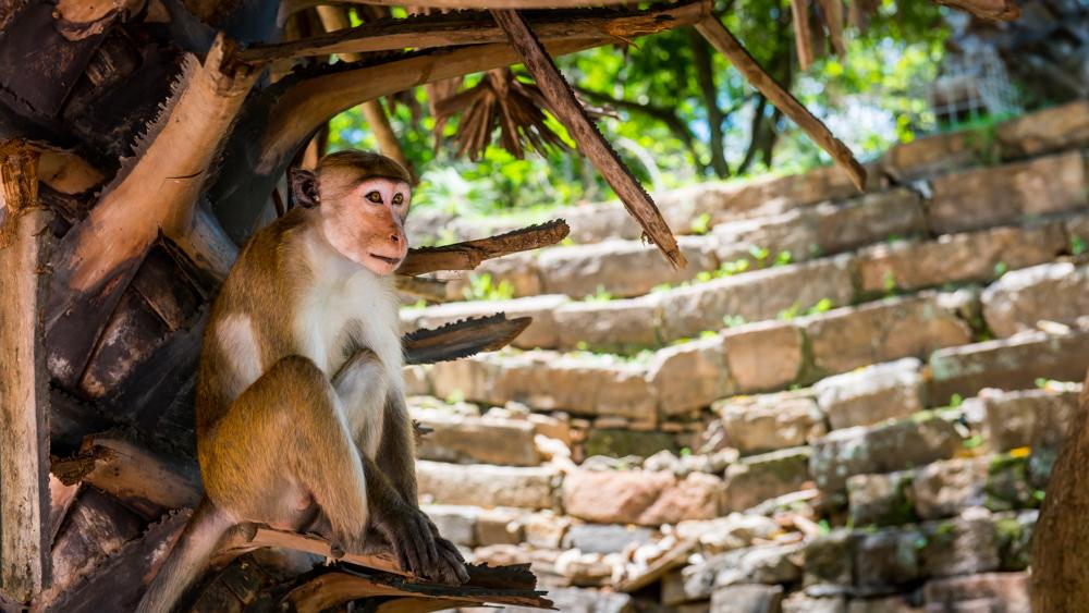 Sri lanka Polonnaruwa-5