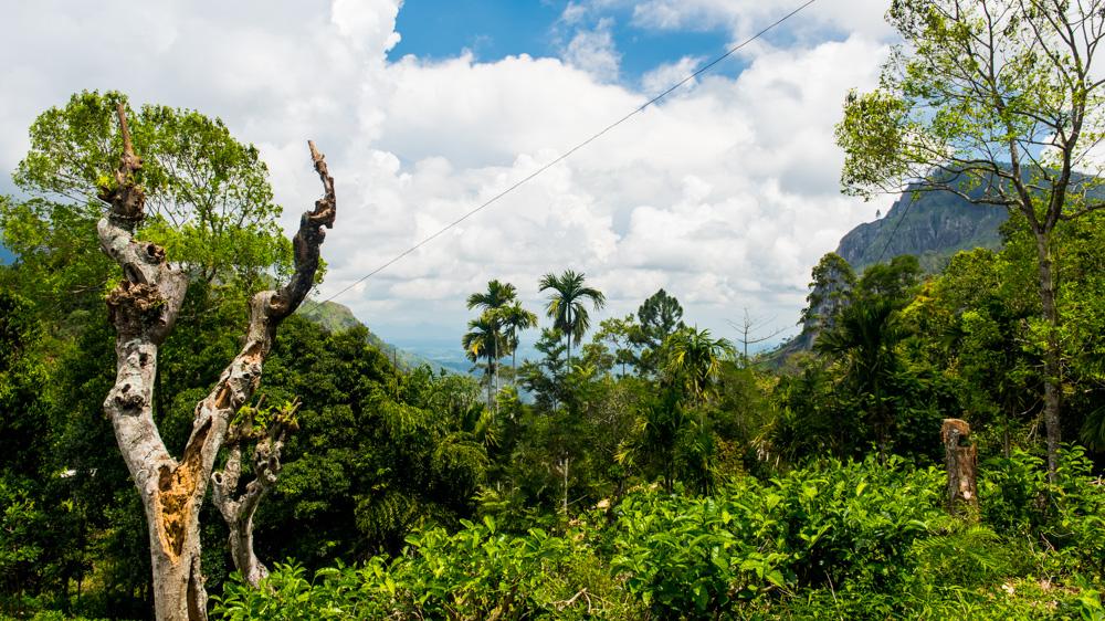 Co zobaczyc w Ella - Sri Lanka-8