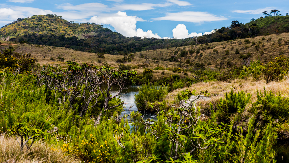 Horton Plains-1-2