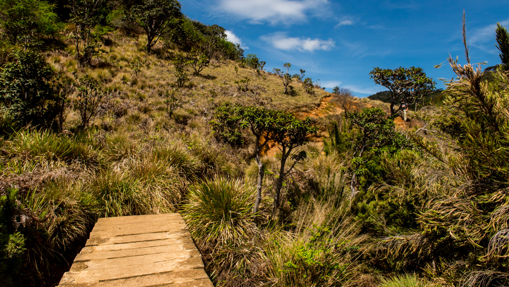Horton Plains-30