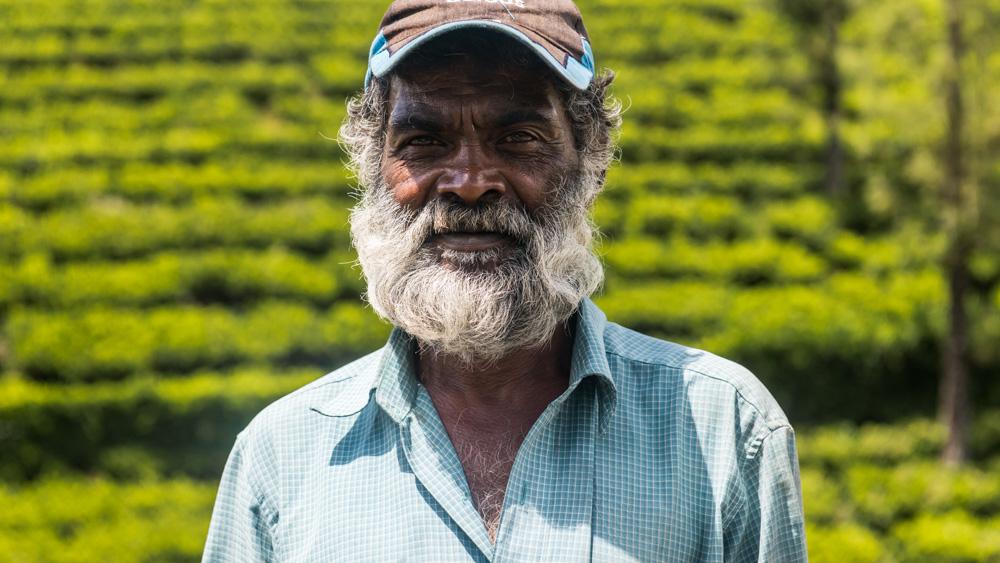 Plantacje herbaty Sri lanka-21