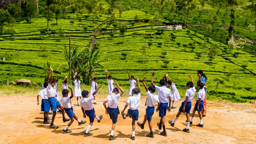 Plantacje herbaty Sri lanka-25