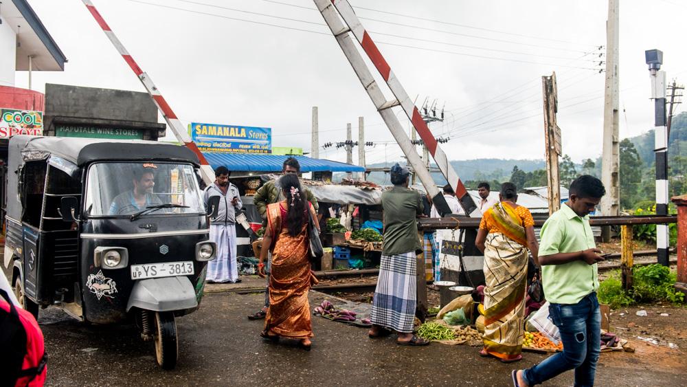 Plantacje herbaty Sri lanka-33
